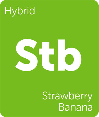 Dank Terpenes Strawnana (Strawberry Banana) terpene strain